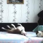 cane ripreso di nascosto