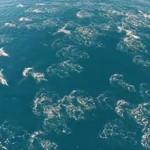drone delfini balene