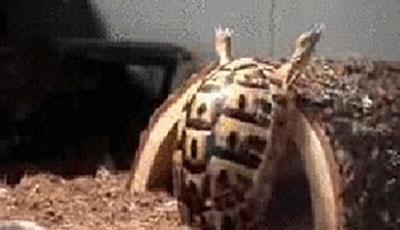 scivoloni animali animazioni