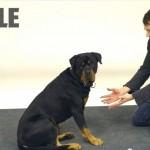 un mago fa sparire dei biscottini le reazioni dei cani