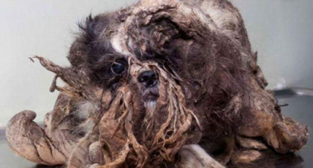 cane spazzatura riabilitato (2)