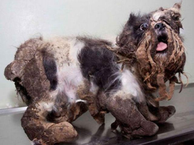 cane spazzatura riabilitato (5)