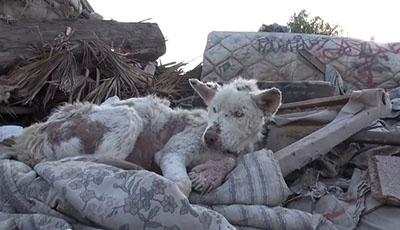 storia cane abbandonato recupero piu bella