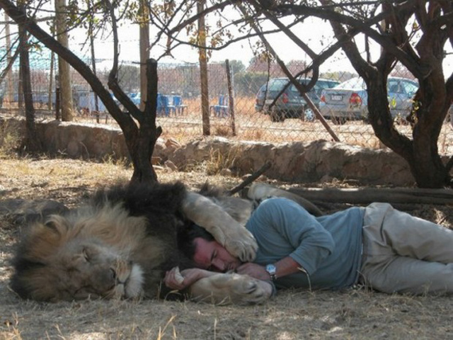 uomo contento di esser divorato dai leoni (7)