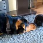 cani amicizia gatti