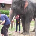 elefante al pianoforte danza