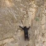 orso arrampicata